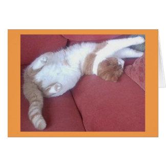 Cartão preguiçoso da foto dos gatos 2 - sestas do