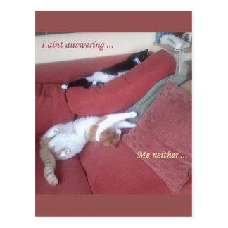 Cartão preguiçoso do divertimento dos gatos -