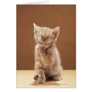 Cartão Preparação do gatinho