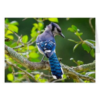 Cartão Presentes tímidos do roupa de Jay azul da
