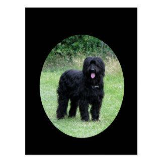 Cartão preto bonito do cão do briard