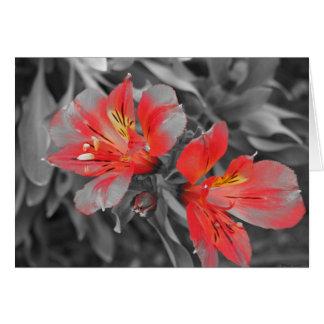 Cartão Preto & branco de Lillies