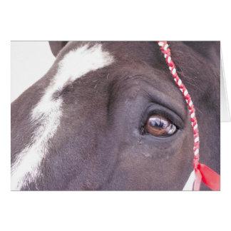 Cartão preto do cavalo