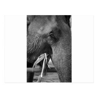 Cartão preto e branco da foto do elefante