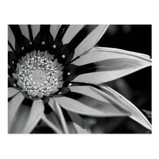 Cartão preto e branco do Wildflower