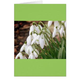 Cartão Primavera impressionante Snowdrops