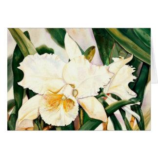 Cartão Princesa-Orquídea BRANCA 2,95