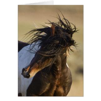 Cartão principal do cavalo selvagem da agitação