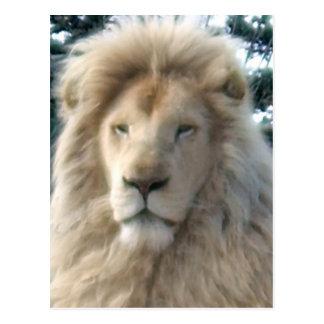 Cartão principal do leão