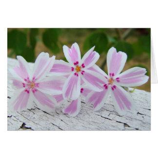 Cartão printemps etoile