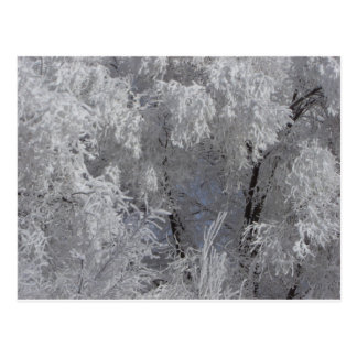 Cartão profundo da manhã de Colorado Frost