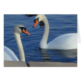 Cartão próximo das cisnes