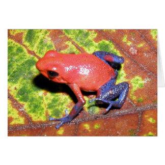 Cartão Pumilio de Dendrobates - sapo do dardo do veneno