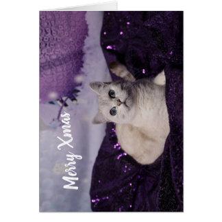 Cartão Purple XMAS Cats