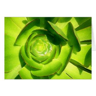 Cartão Quadrado verde do Succulent pelo Amy Vangsgard