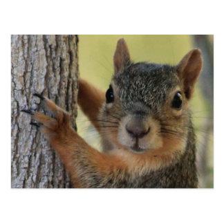 Cartão que caracteriza o esquilo de árvore