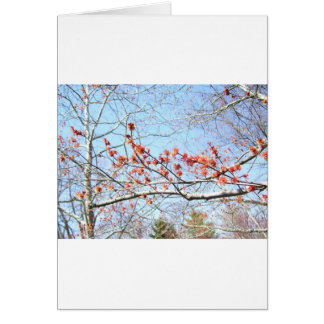 Cartão Queda acre das naturezas no ó
