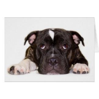 Cartão R001 de Staffordshire bull terrier