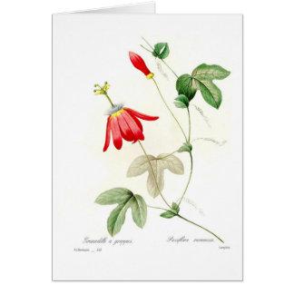 Cartão Racemosa do Passiflora
