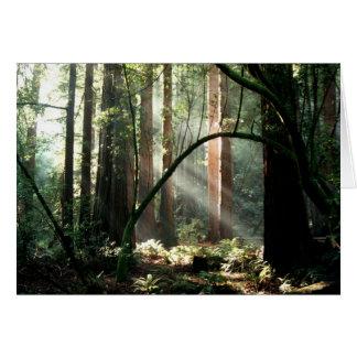Cartão Raios de sol nas madeiras