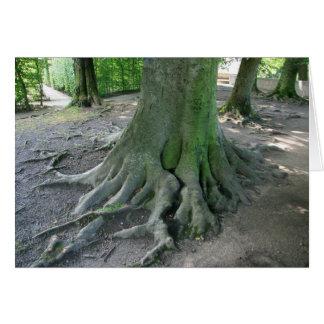 Cartão Raizes da árvore