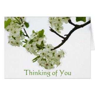 Cartão Ramo de árvore da pera que pensa de você, vazio