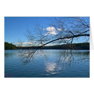 Cartão Ramo desencapado sobre o lago