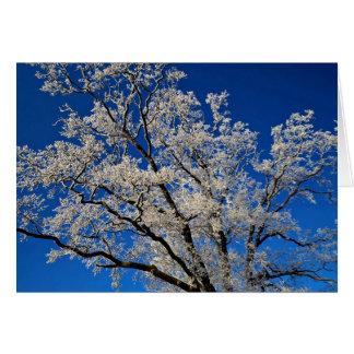 Cartão ramos Frost-cobertos, inverno de Inglaterra