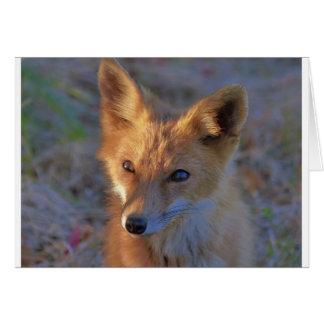 Cartão raposa