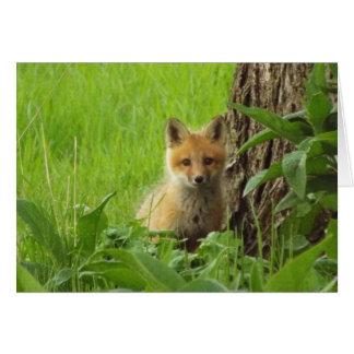 Cartão Raposa bonito do bebê na fotografia da primavera