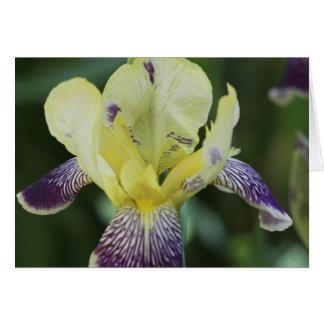 Cartão raro da orquídea