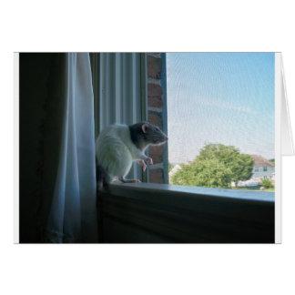 Cartão Rato contemplativo