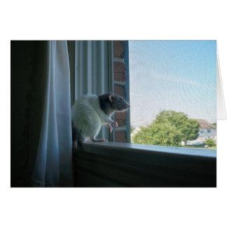 """Cartão Rato contemplativo """"desejo você estava aqui"""""""