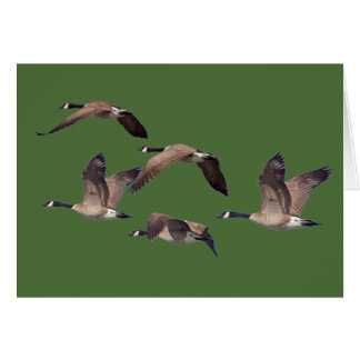Cartão Rebanho de gansos selvagens