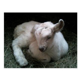 Cartão recém-nascido do miúdo da cabra cartoes postais
