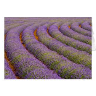Cartão Região de France, Provence. Fileiras curvadas de