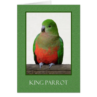 Cartão Rei bonito Papagaio, pássaro australiano