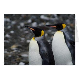 Cartão Rei pinguins