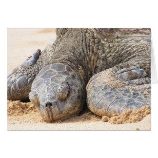 Cartão Repose da tartaruga de mar