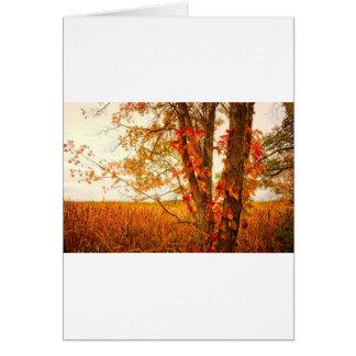 Cartão Reserva natural do nacional dos prados da árvore