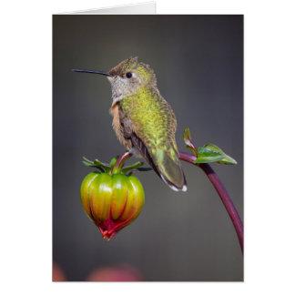 Cartão Restos do colibri na flor em botão