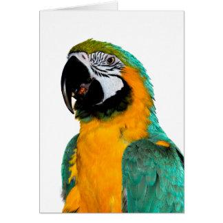Cartão retrato colorido do pássaro do papagaio do macaw
