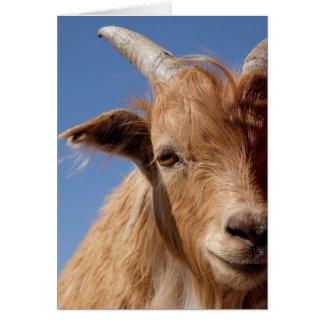 Cartão Retrato da cabra de caxemira