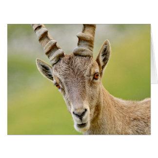 Cartão Retrato de um íbex