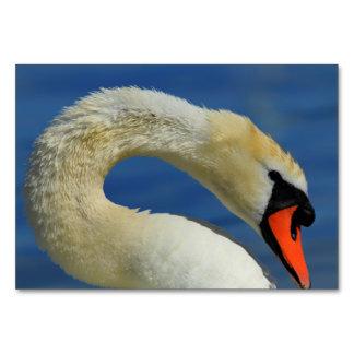 Cartão Retrato de uma cisne bonita