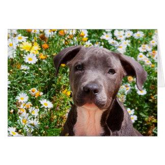 Cartão Retrato do filhote de cachorro de Staffordshire
