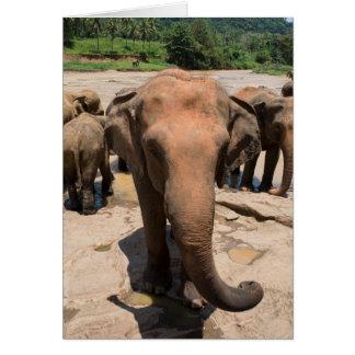 Cartão Retrato do grupo do elefante, Sri Lanka