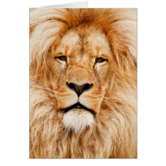 Cartão Retrato do leão