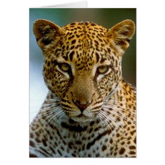Cartão Retrato do leopardo