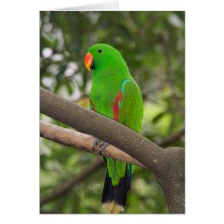 Cartão Retrato verde do papagaio